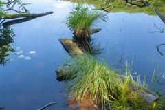 Legno morto nel lago Herthasee nel Nationalpark Jasmund vicino immagine stock libera da diritti