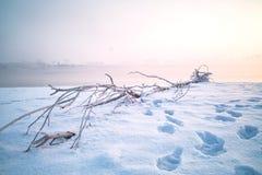 Legno morto su neve Immagine Stock