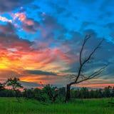 Legno morto su un fondo del tramonto drammatico immagini stock libere da diritti