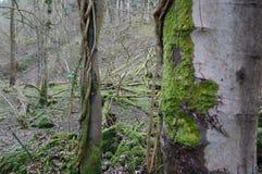 Legno muscoso del tronco di albero vicino a Richmond North Yorkshire fotografia stock