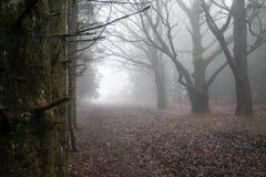 Legno nebbioso fotografie stock