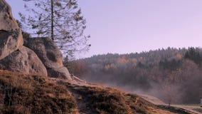 Legno nebbioso alla mattina di autunno video d archivio