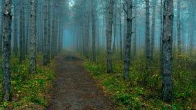 Legno nebbioso durante l'autunno fotografie stock