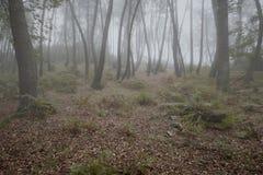 Legno nebbioso misterioso fotografia stock