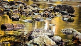Legno nel fiume Fotografia Stock