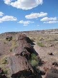 Legno petrificato in deserto Fotografie Stock