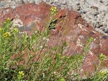 Legno petrificato in deserto Fotografia Stock Libera da Diritti