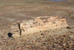 Legno petrificato nella Patagonia Fotografie Stock