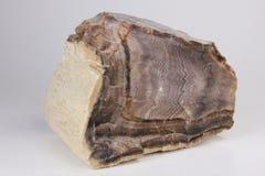 Legno Petrified della spina di pesce del canyon dell'inferno Fotografia Stock