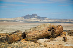 Legno Petrified nel Patagonia. immagini stock