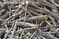 Legno, quercia d'argento Fotografia Stock