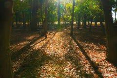 Legno in Richmond Park, Londra fotografia stock
