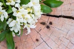 Legno satinato dell'India di andamane su fondo di legno Immagini Stock Libere da Diritti