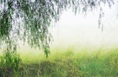 Legno segreto mistico magico nebbioso del fondo astratto di fantasia fotografia stock libera da diritti