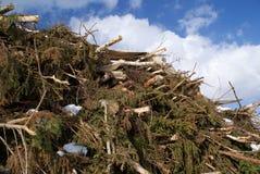 Legno sfacciato per la biomassa Fotografie Stock Libere da Diritti