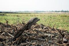 Legno sul campo in campagna immagine stock