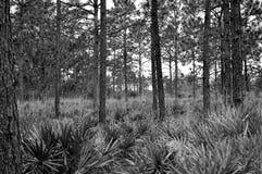 Legno tropicale della Florida Fotografia Stock