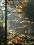 Legno variopinto o foresta fotografie stock
