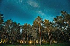 Legno verde degli alberi in parco sotto il cielo stellato di notte con la galassia della Via Lattea Fotografie Stock