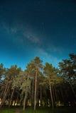 Legno verde degli alberi in parco sotto il cielo stellato di notte con la galassia della Via Lattea Immagine Stock Libera da Diritti