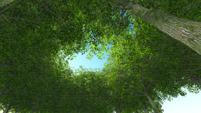 legno verde della natura Tronco e coma Fotografia Stock