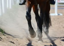 Legs of a sports horse in sand. Equestrian sport in details. Legs of a bay sports horse in sand. Equestrian sport in details royalty free stock images