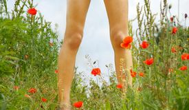 Legs on blooming meadow Stock Photography