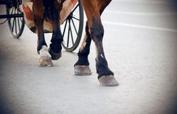 The legs of a brown horse harnessed to a carriage stock photos
