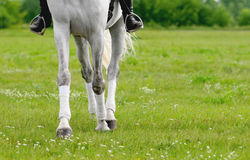 Legs of dressing horse and rider detail closeup outdoors Royalty Free Stock Photography