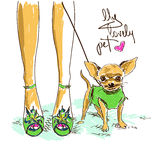 Legs of fashion girl and little chihuahua Stock Images