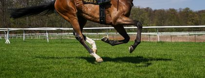 Racehorse on grass track. Legs and feet of thoroughbred racehorse on turf track on sunny day Royalty Free Stock Photo