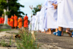 Legs and feet walking meditation. Stock Photo