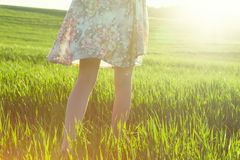 Legs in field in morning. Girls legs walking in field in morning sun light royalty free stock image