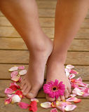 Legs an flowers. Legs and rose flower petals Stock Image