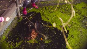 Legs of a girl standing on a metal ladder and dangling feet in the old pool overgrown with duckweed. Crane shot. Close up legs of a girl standing on a metal stock video footage