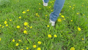 Legs going on a grass with dandelions. Slow motion stock video