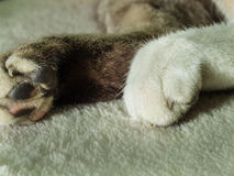 Legs of Grey Cat Stock Image