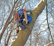 Legs, hands and equipment of climber of thearborist stock image