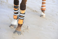Legs of the horse Stock Image