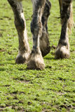 Legs of horse on field Royalty Free Stock Images