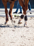 Legs of horse in movement. close up Stock Images
