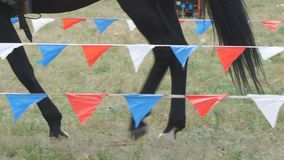 Legs of horse walking on the grass. Legs of a horse walking on the grass stock video