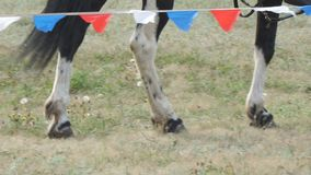 Legs of horse walking on the grass. Legs of a horse walking on the grass stock video footage