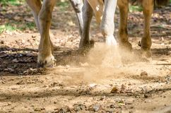 Legs of horses riding through Hyde Park in London stock photo