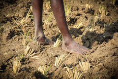 Legs. Indian Farmer Standing in Dry Land royalty free stock photography