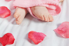 The legs of an infant and rose petals. Stock Photography