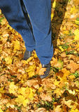 Legs on leaves - 2 Stock Photo