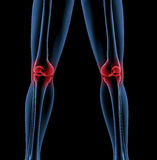 Legs of a medical skeleton Stock Photo