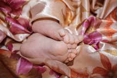Legs of a newborn baby royalty free stock photo