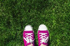 Legs in old pink sneakers on green grass. View from above. The c stock photo